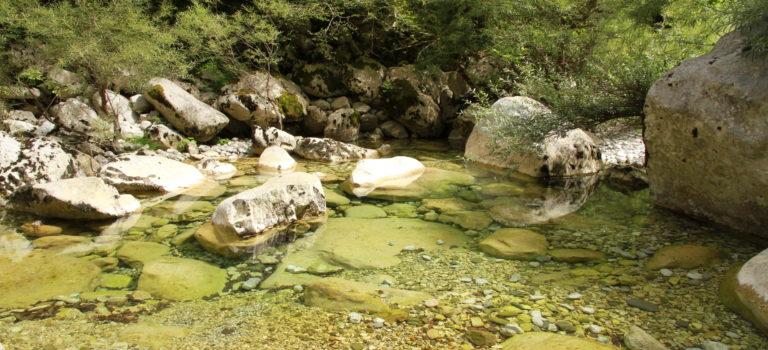 Les diatomées, sentinelles de l'environnement